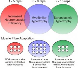 Hypertrophy_transition